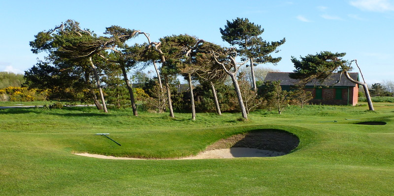 Wind-sculpted trees, thirteenth hole, Royal Lytham & St. Annes.