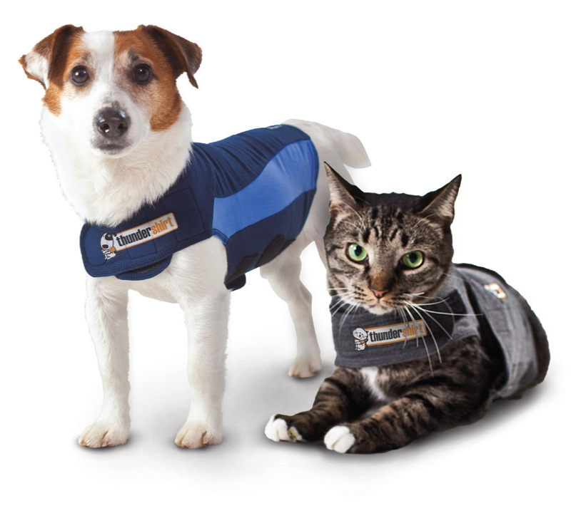 Benefits Of Making Your Dog A Service Dog
