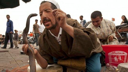 snakeguyfnaa