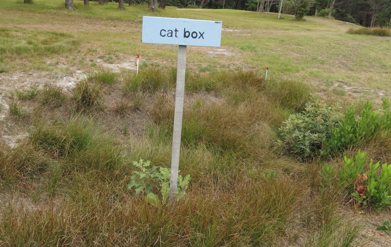 catboxbhappy